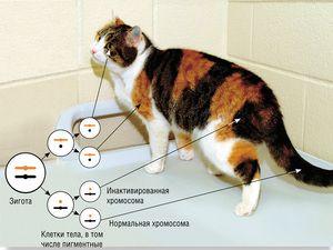 38 cromozomi la pisici