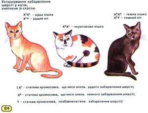 Câți cromozomi la pisici