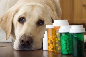 Tratamentul ficatului la câini