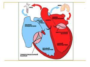 Tulburări cardiovasculare