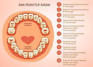 Când dinții copilului sunt tăiați