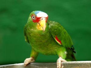 Lumea papagalilor