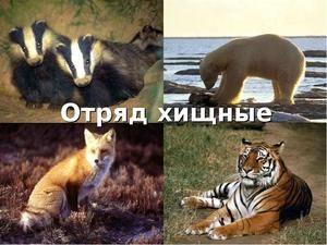 Animale mamifere dăunătoare: descriere și specie