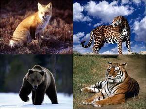 Animale carnivore