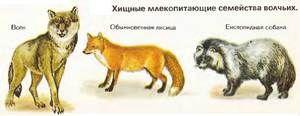 Predatori din familia lupilor