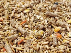 Furaje de cereale pentru gâște