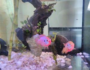 Acvariu crom neon de pește