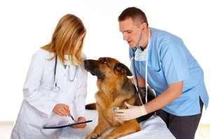 Indicații pentru utilizarea Alben pentru animale