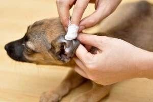 Instrucțiuni de utilizare Fungina pentru câini și pisici