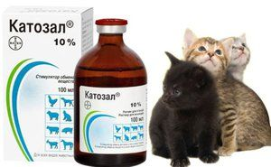Medicamentul veterinar al medicului veterinar