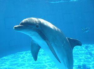 Cum dorm delfini și cum respiră?