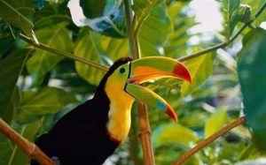 Descrierea păsărilor exotice