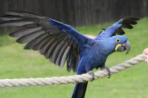 Păsări exotice: specii