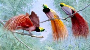 Păsări exotice: descriere