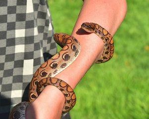 Cum să explic un vis despre șerpi