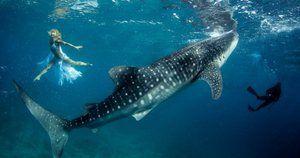 Ce avertizează despre un vis despre un rechin?