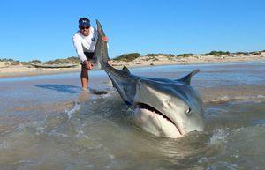 Prinde un rechin