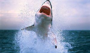 Teama de rechin