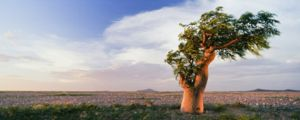 Ce vis vis de copac?