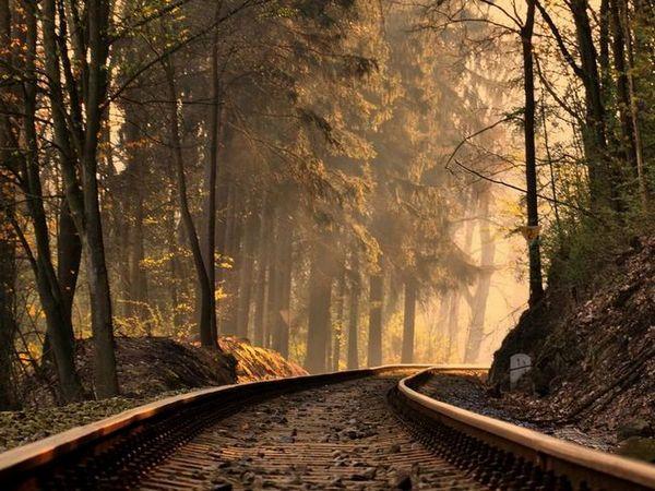 Într-un vis, vezi drumul