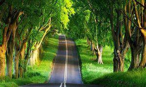 Care este drumul într-un vis
