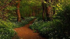 Care este visul unui drum forestier