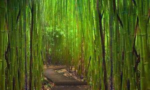 Drum cu plante într-un vis