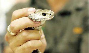 Interpretarea viselor despre șerpi