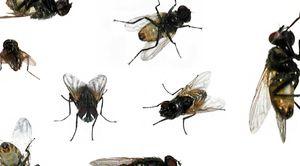 Să viseze insecte