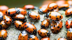 Multe insecte