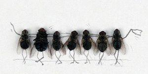 Vise despre muște