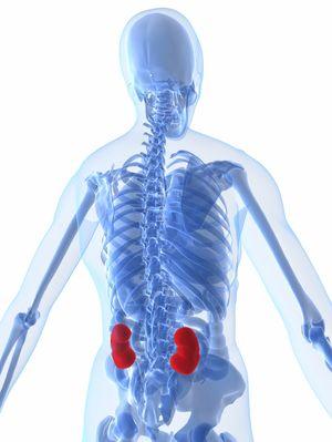 Cum se manifestă bolile renale?