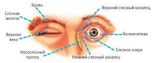 Schema canalului uman lacrimal