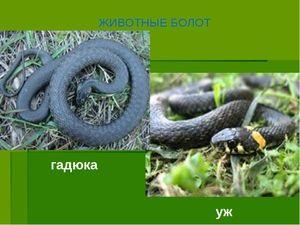 Diferențele dintre viperă și șarpe
