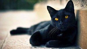 Nume pentru pisici negre