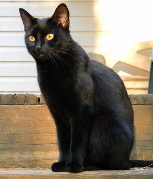 Numele unei pisici negre