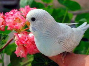 Cum să numești un parakeet