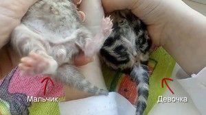 Cum arata un pui nou-nascut?