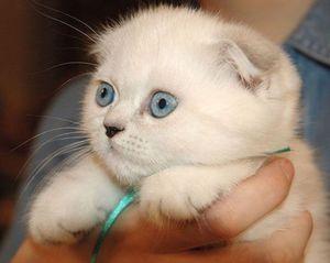 Cum se determină vârsta pisicilor