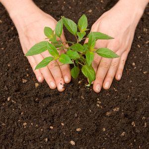 Plantați un copac în memoria unui câine