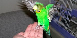 Interpretarea unui vis despre un papagal
