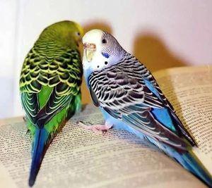 Cum se comportă un papagal într-un vis