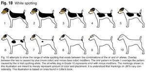 Prin ce semne poți spune vârsta câinelui