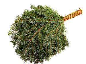 Descrierea măturei de conifere cu aburi