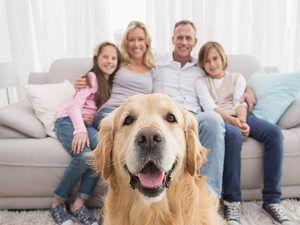 Acceptăm livrarea la un câine
