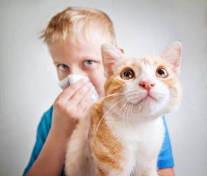 Reacție alergică la părul pisicilor