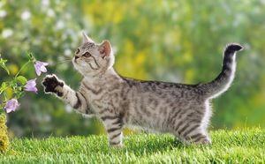Reacție alergică la pisici