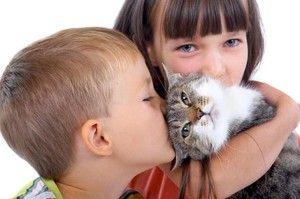 Cum se manifestă alergia la pisică?