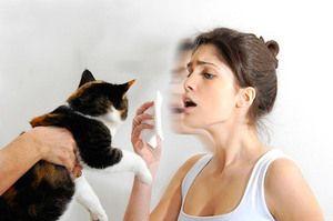 Cum sa scapi de o reactie alergica la o pisica