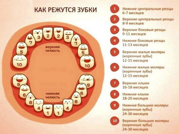 Procesul de dentiție